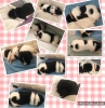 11 puppy\'s van Wermud! bij kennel v/d Bloemenjungle